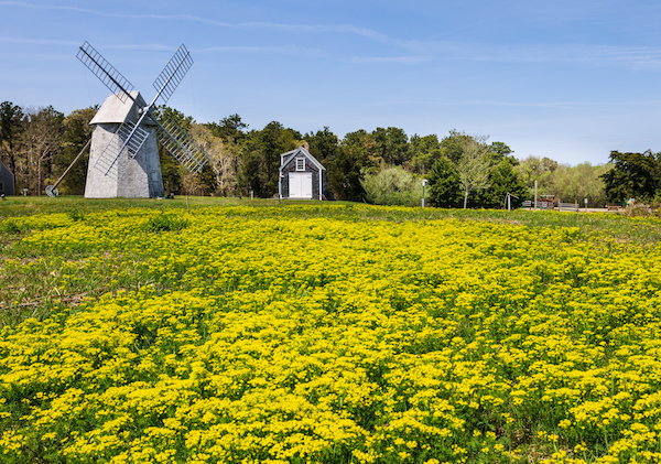 Bloom Festival 2020 Brewster in Bloom 2020 | Cape Cod Festivals