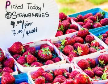 Cape Cod Strawberries
