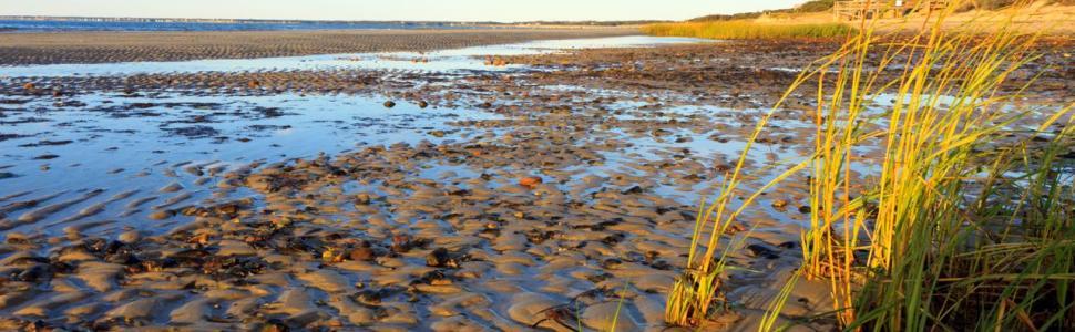 Cape Cod Tide Charts Martha Murray Vacation Rentals