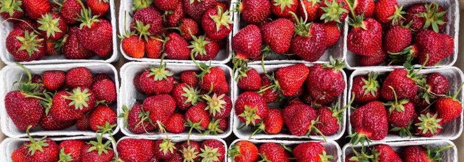 Annual Strawberry Day Cape Cod