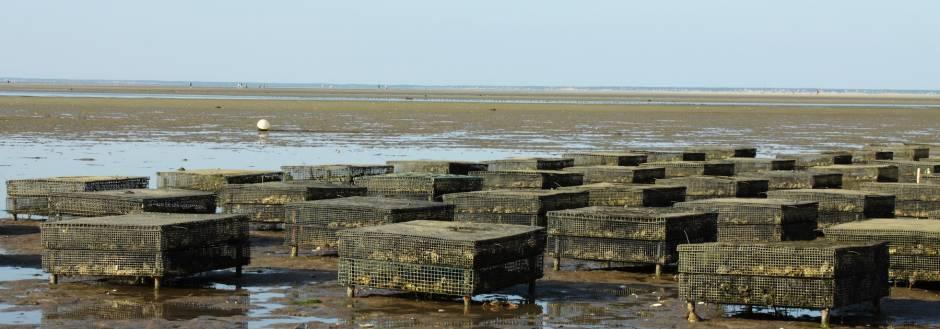 wellfleet oyster festival